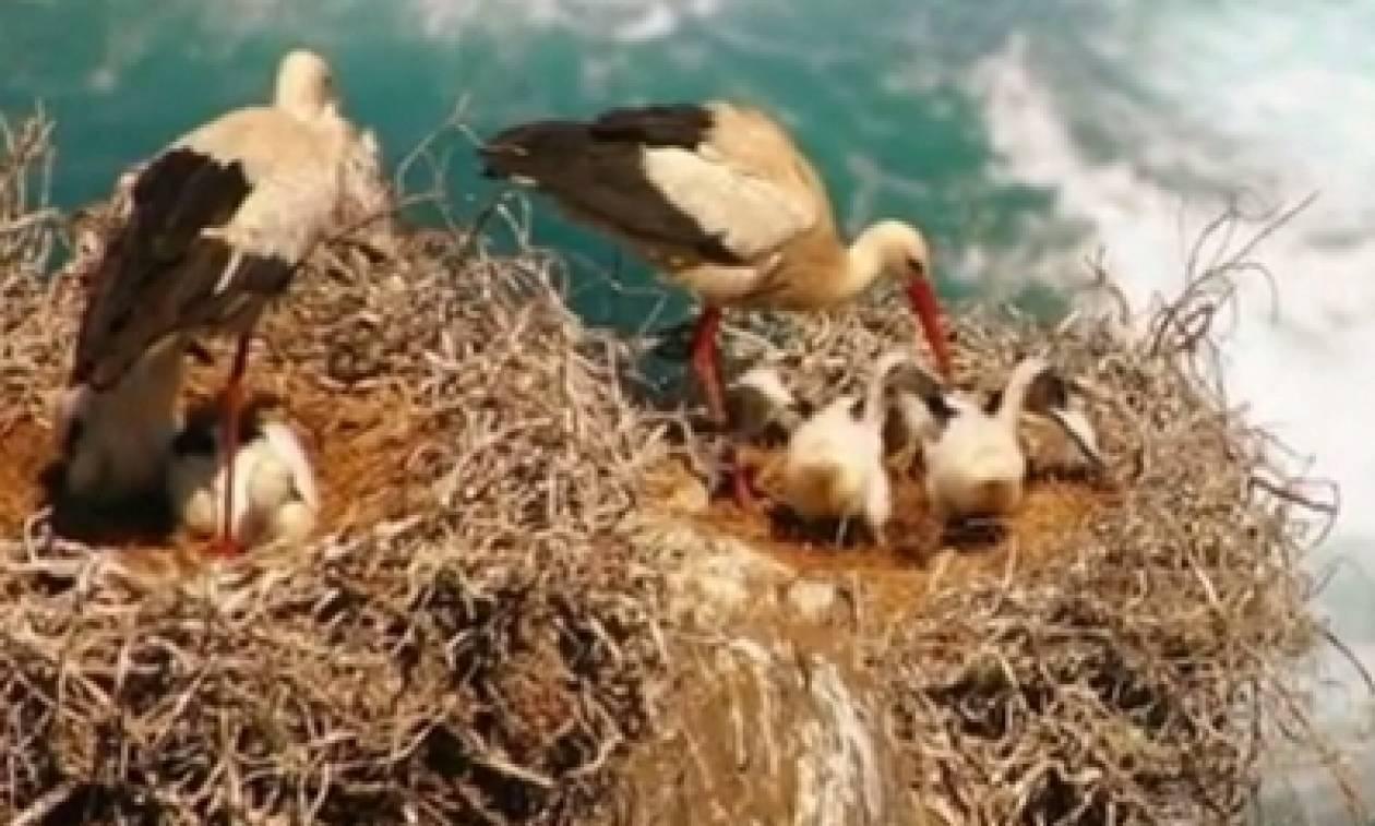 Μπορείτε να φανταστείτε έναν λόγο για τον οποία πολλά πτηνά μεταφέρουν γόπες από τσιγάρα στις φωλιές