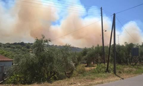 Πύρινος εφιάλτης στην Κορώνη – Οι φλόγες «έγλειψαν» σπίτια