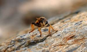 Σοκ στην Αρκαδία - Πέθανε από τσίμπημα σφήκας