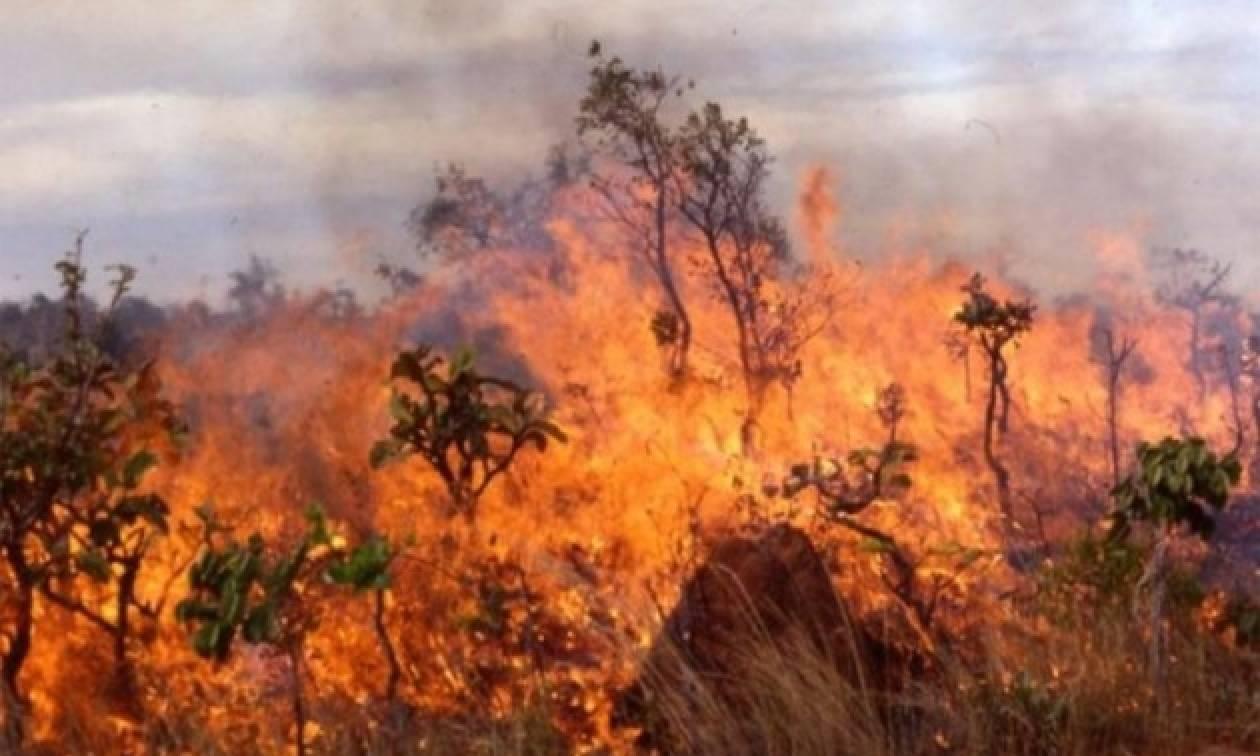 Υπό μερικό έλεγχο η φωτιά στον Καρά Τεπέ της Μυτιλήνης