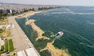 Ο Ιβάν Σαββίδης πληρώνει «όσα χρειαστούν» για να καθαρίσει ο Θερμαϊκός από το φυτοπλαγκτόν