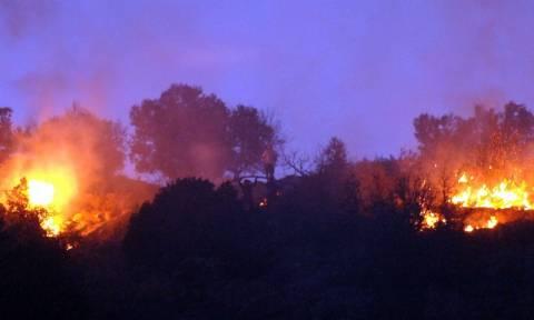 Κεφαλονιά: Υπό μερικό έλεγχο η φωτιά στην περιοχή της Αγίας Ειρήνης