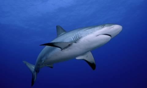 Πανικός με καρχαρία σε παραλία της Λάρυμνας:  Συγκλονιστική περιγραφή λουόμενου (vid)
