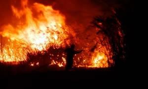 Φωτιά στη Λακωνία: Σε ύφεση η πυρκαγιά στην περιοχή Κοκκάλα