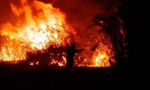 В Греции крупный лесной пожар угрожает населенным пунктам