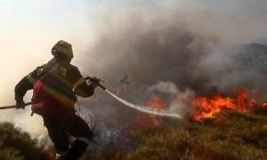 Φωτιά ΤΩΡΑ: Μεγάλη πυρκαγιά κοντά σε κατοικημένη περιοχή στο Βιβάρι Δρεπάνου