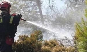 Φωτιά Αλεξανδρούπολη: Υπό έλεγχο η φωτιά που εκδηλώθηκε στην Κίρκη