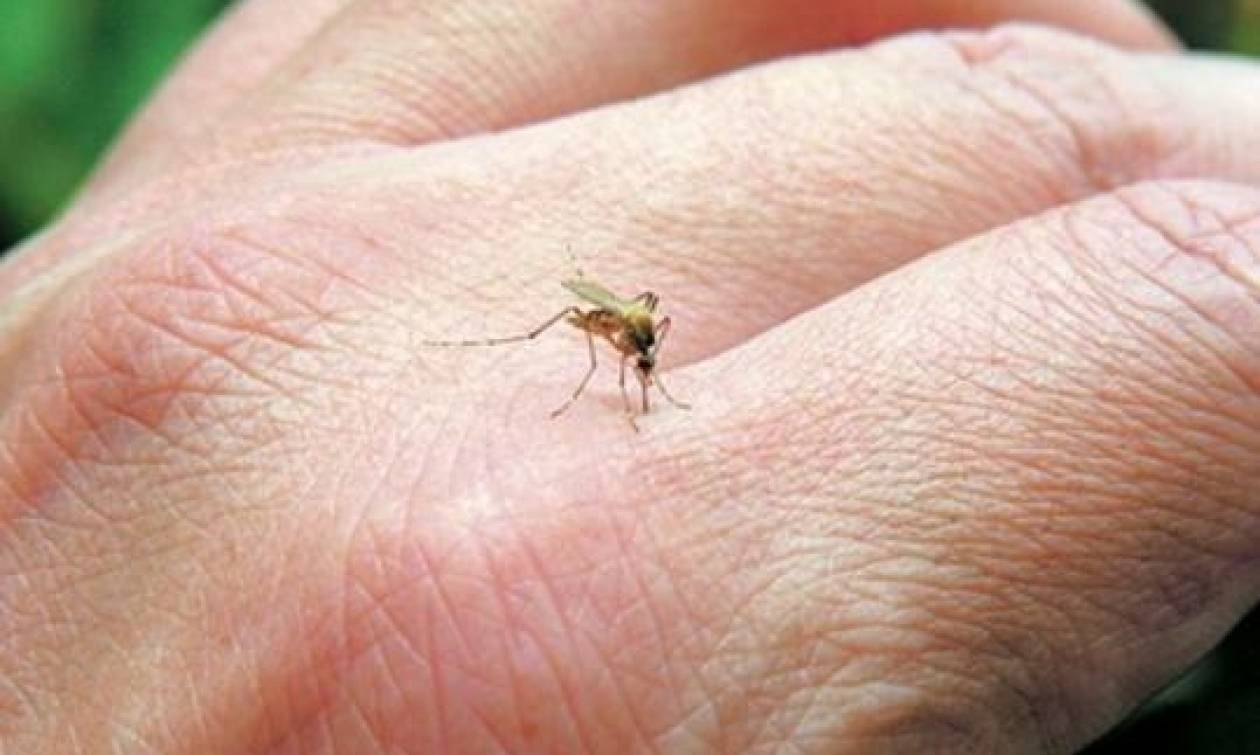Προσοχή! Ποιες περιοχές της Ελλάδας μπαίνουν σε καραντίνα λόγω ελονοσίας!