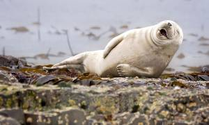Όταν η φύση έχει κέφια: Οι πιο ξεκαρδιστικές φωτογραφίες των βραβείων Comedy Wildlife