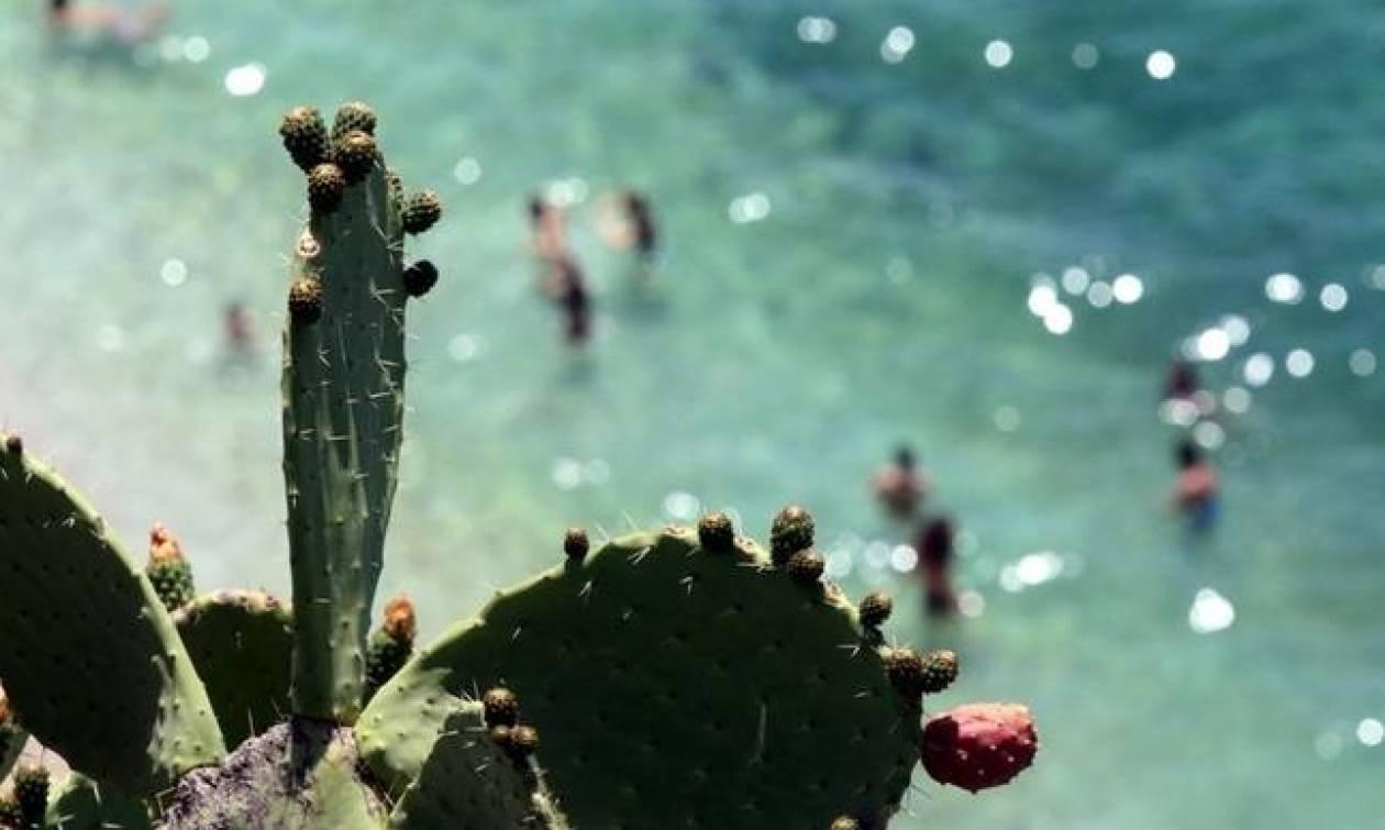 Καιρός - Καύσωνας: «Φούρνος» και πάλι όλη η χώρα - Άγγιξε τους 40 ο υδράργυρος