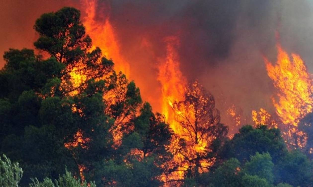 Φωτιά ΤΩΡΑ: Μάχη με τις φλόγες για τη σωτηρία του πευκοδάσους στις Ορθωνιές της Ζακύνθου