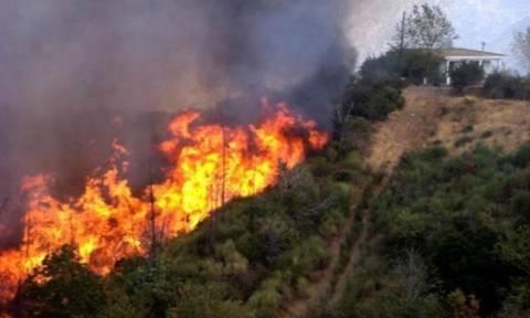 На Кипре пожар в районе Пафоса удалось взять под контроль