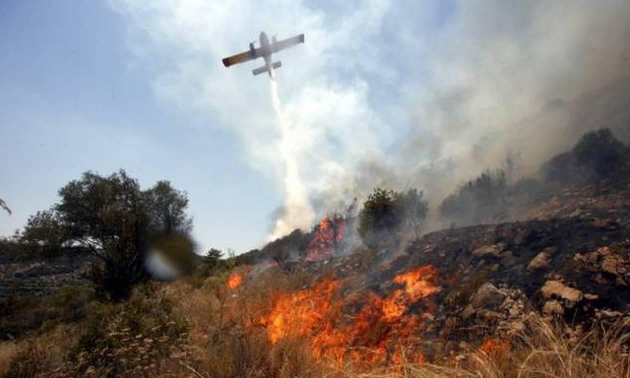 Ξάνθη: Υπό έλεγχο η φωτιά που ξέσπασε στο δάσος του Νέστου