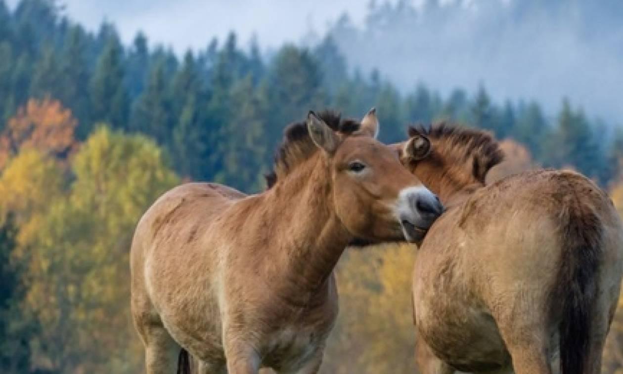 Δεκάδες συλλήψεις από την Europol για εμπόριο κρέατος αλόγου