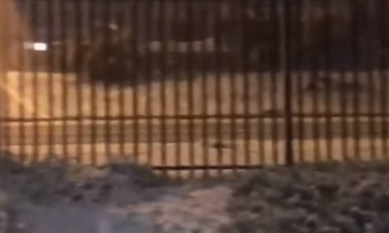 Πυκνό χιόνι κάλυψε τα πάντα στη Χιλή (video)