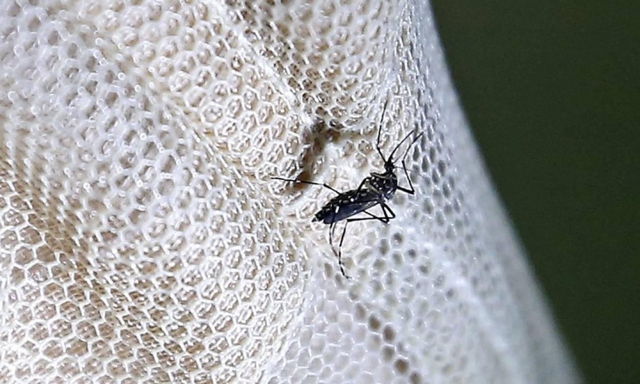 «Χτύπησε» ο ιός του Δυτικού Νείλου – Εμφανίστηκε το πρώτο κρούσμα στη χώρα μας