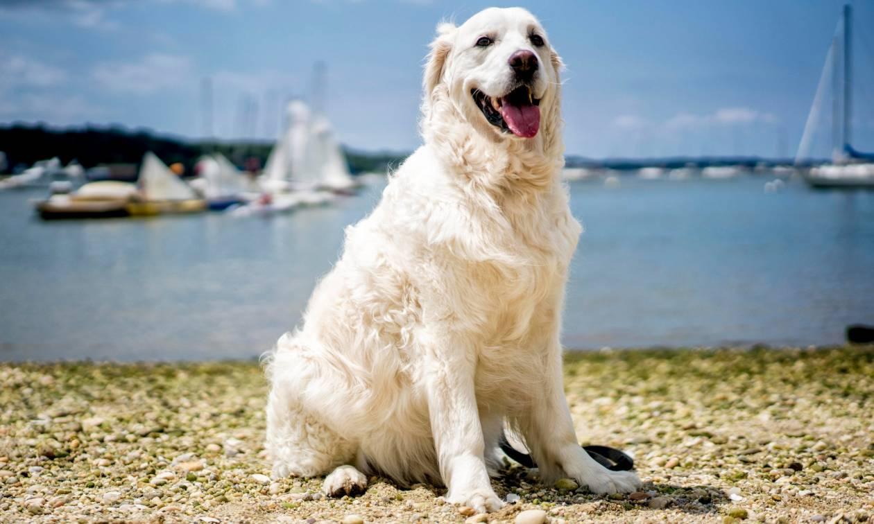 Viral: Σκύλος βουτά στα νερά του Λονγκ Άιλαντ και σώζει ελαφάκι που πνιγόταν - Δείτε το βίντεο