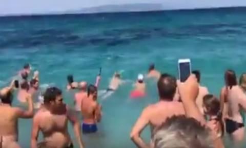 Σκόπελος: Σε ντελίριο λουόμενοι όταν δελφίνι βγήκε στα ρηχά (vid)
