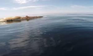 Επαθαν σοκ: Ψαράδες γλίτωσαν από τύχη όταν ξαφνικά τους επιτέθηκε... (Video)