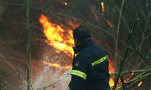 Μεγάλη πυρκαγιά στα Ιωάννινα κοντά σε οικισμό