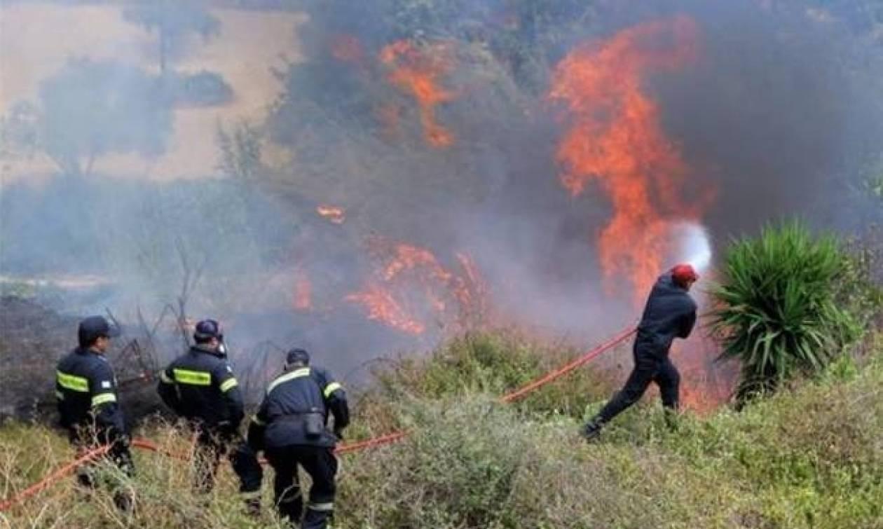 Φωτιά τώρα: Σε εξέλιξη πυρκαγιά στην Άνω Καλλιθέα Ξυλοκάστρου