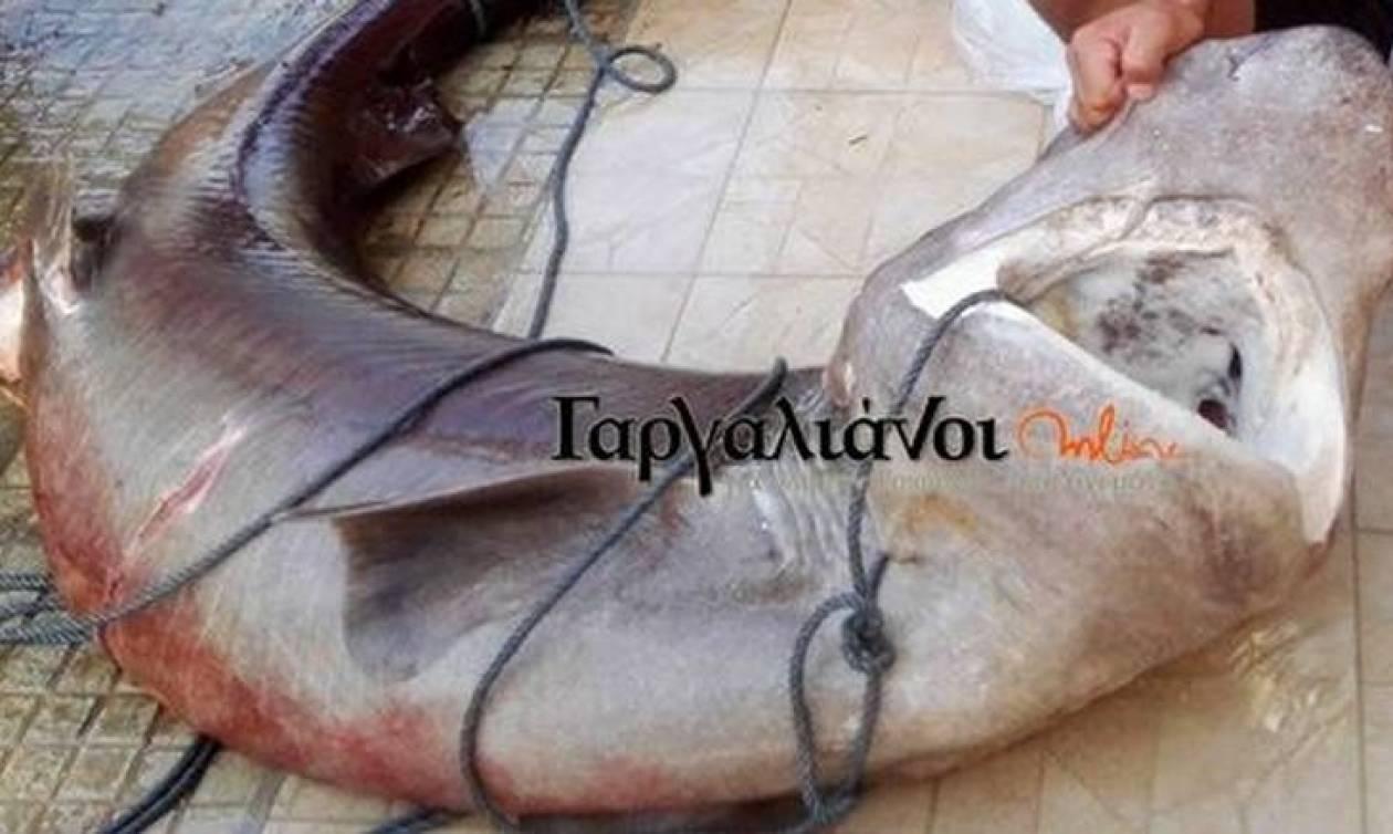 Καρχαρίας τριών μέτρων στο λιμάνι της Μαραθούπολης! (pic)