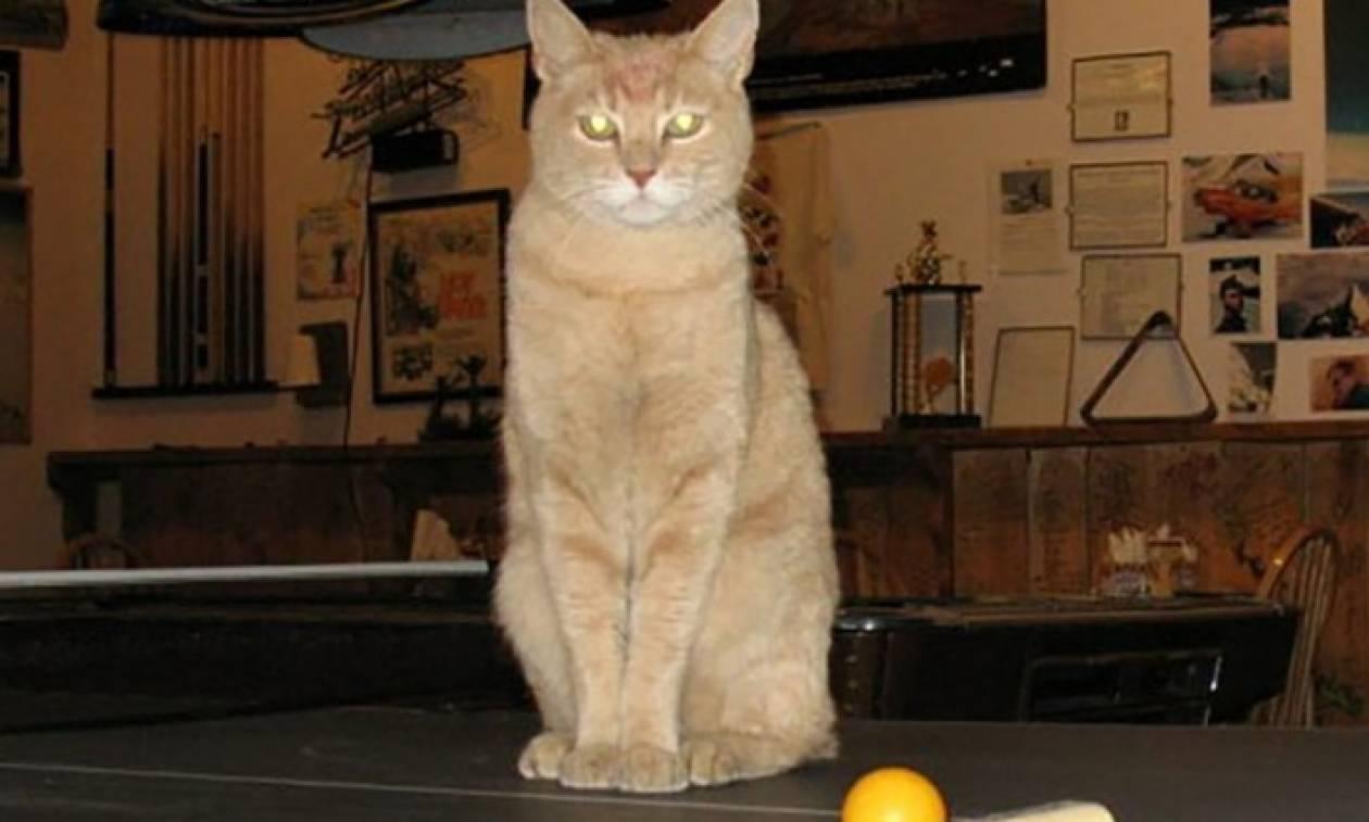 Πέθανε ο Stubbs, ο θρυλικός γάτος… δήμαρχος πόλης της Αλάσκας