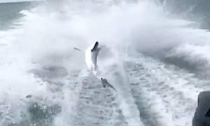 Εξοργιστικό βίντεο: Σκάφος «σέρνει» καρχαρία με ιλιγγιώδη ταχύτητα (vid)