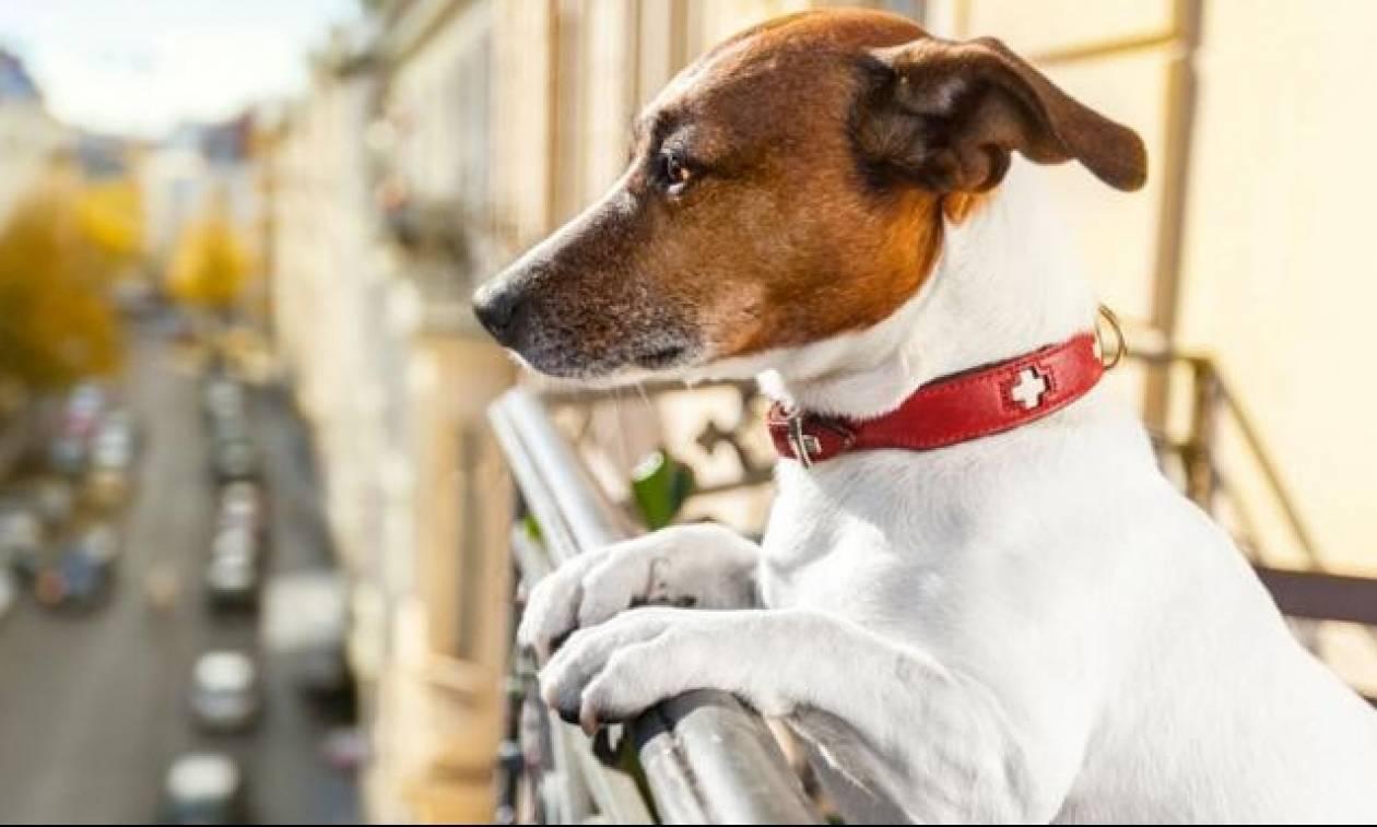 Τι ορίζει ο νόμος για τους σκύλους στο διαμέρισμα