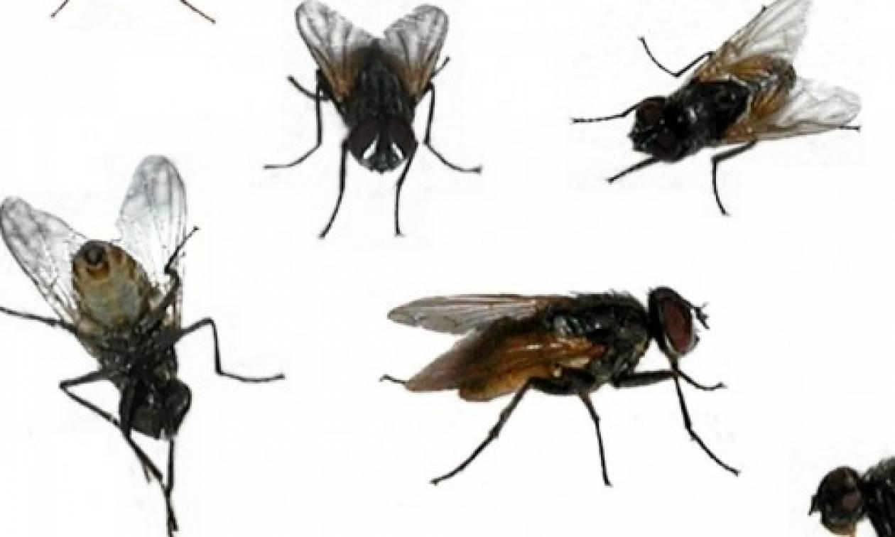 Αυτό είναι το απόλυτο... κόλπο για να διώξετε τις μύγες απ' το σπίτι σας (video)
