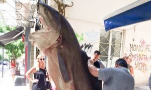 Απίθανη ψαριά στο Αγρίνιο: Έπιασαν «Κόπανο» 300 κιλών! (pics)