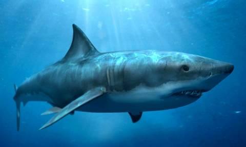 Редкую большую акулу выловили рыбаки в Греции