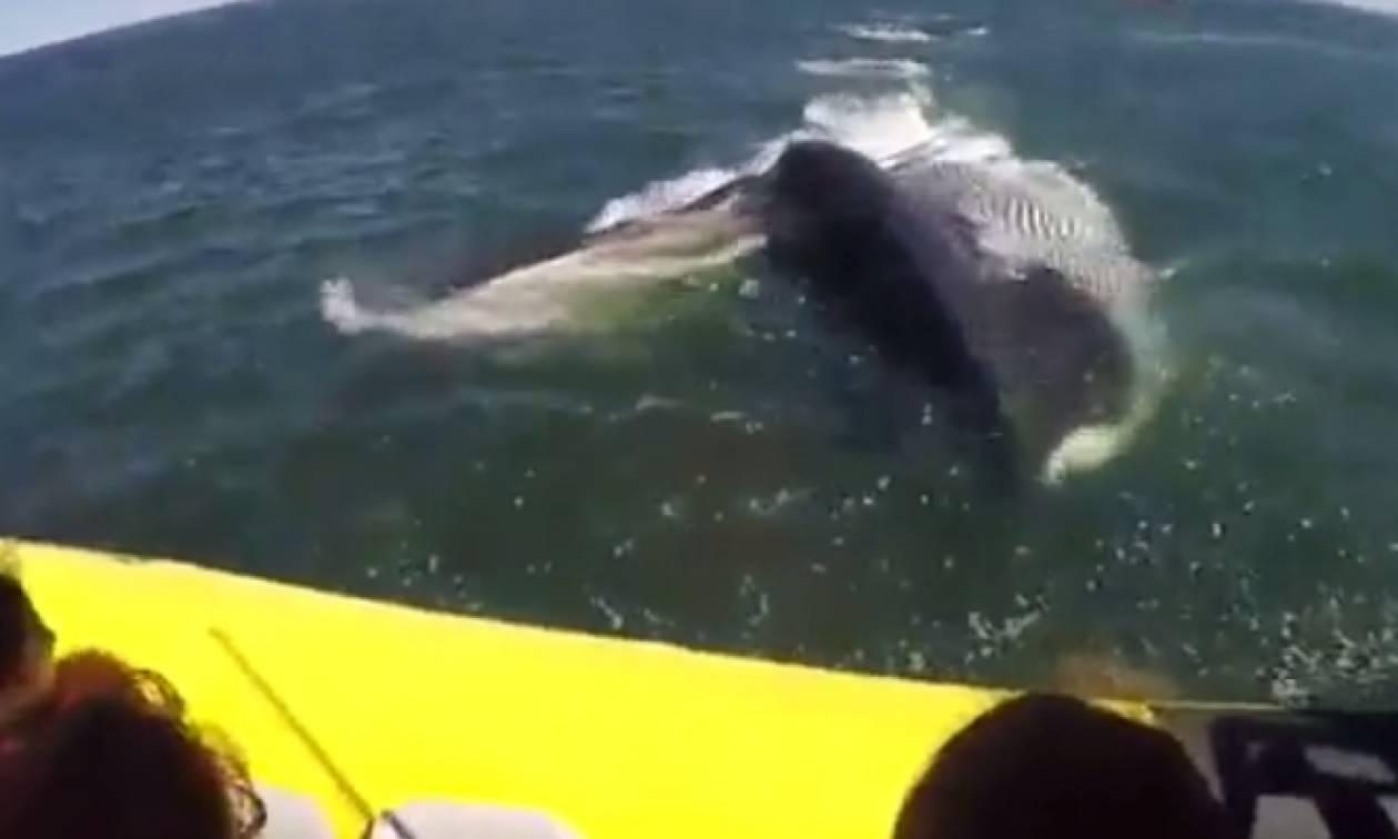 Φωτογράφιζαν φάλαινες απ' τη βάρκα τους, όταν ξαφνικά πάγωσε το χαμόγελό τους (video)