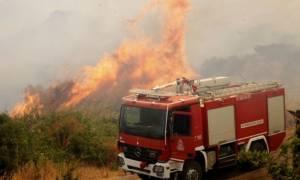 «Στο κόκκινο» σήμερα αυτές οι περιοχές- Μεγάλος κίνδυνος εκδήλωσης πυρκαγιάς