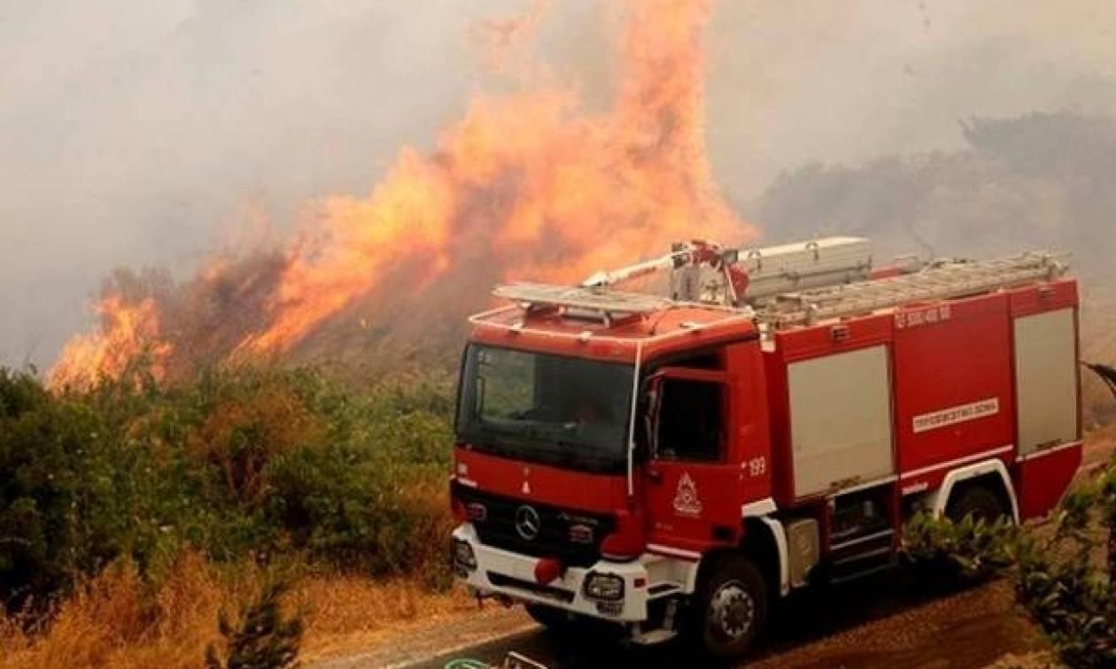 Στις αυλές των σπιτιών η πυρκαγιά στην Ανάβυσσο Αττικής - Συναγερμός στην Πυροσβεστική