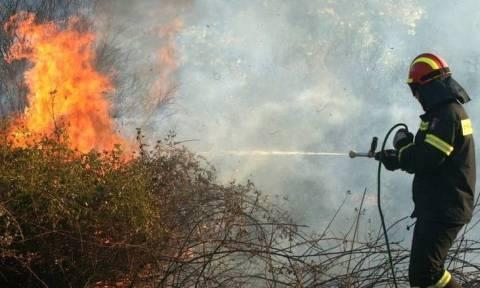 Φωτιά ΤΩΡΑ: Σε εξέλιξη πυρκαγιά σε αγροτοδασική έκταση στην περιοχή Φραγκαβίλα Αμαλιάδας