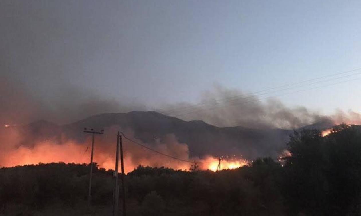 Φωτιά ΤΩΡΑ: Σε ύφεση η πυρκαγιά στην Αμαλιάδα