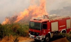 Φωτιές: Ξέσπασαν 54 δασικές πυρκαγιές μέσα σε ένα 24ωρο – Πολύ υψηλός και σήμερα ο κίνδυνος