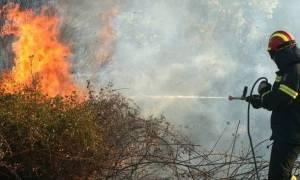 Φωτιά: Στις φλόγες ο οικισμός της Κνωσού - «Στάχτες» 15 στρέμματα γεωργικής έκτασης
