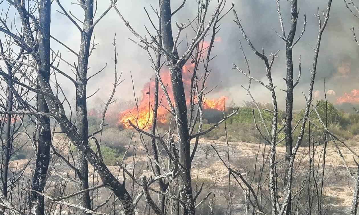 Φωτιά Λαγονήσι: Στο νοσοκομείο τρεις πυροσβέστες - Πύρινη «κόλαση» στην Ανάβυσσο