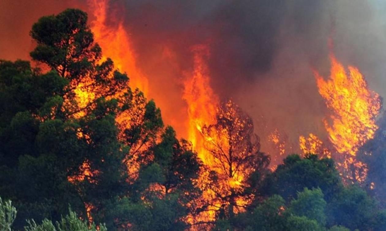 Σε πύρινο κλοιό η Αλβανία: Ελληνικά πυροσβεστικά συμμετέχουν στην κατάσβεση
