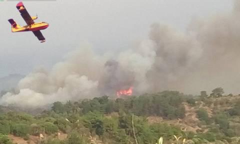 Φωτιά Μυτιλήνη: Καταγγελία - σοκ για τη μεγάλη πυρκαγιά που καίει το νησί
