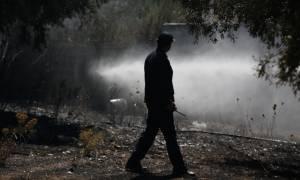Φωτιά Λαγονήσι: Κρανίου τόπος η περιοχή - Εικόνες που σοκάρουν από την πύρινη καταστροφή