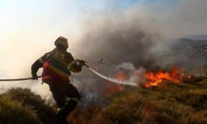 Νέος πύρινος εφιάλτης: Μεγάλη φωτιά στην Ηλεία