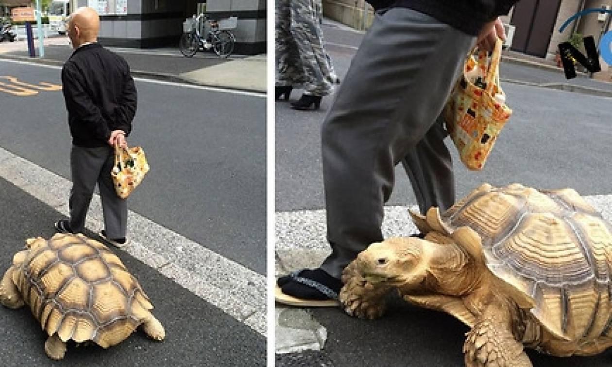Εχει ως κατοικίδιο μια τεράστια χελώνα και τη βγάζει βόλτα στους δρόμους (video)
