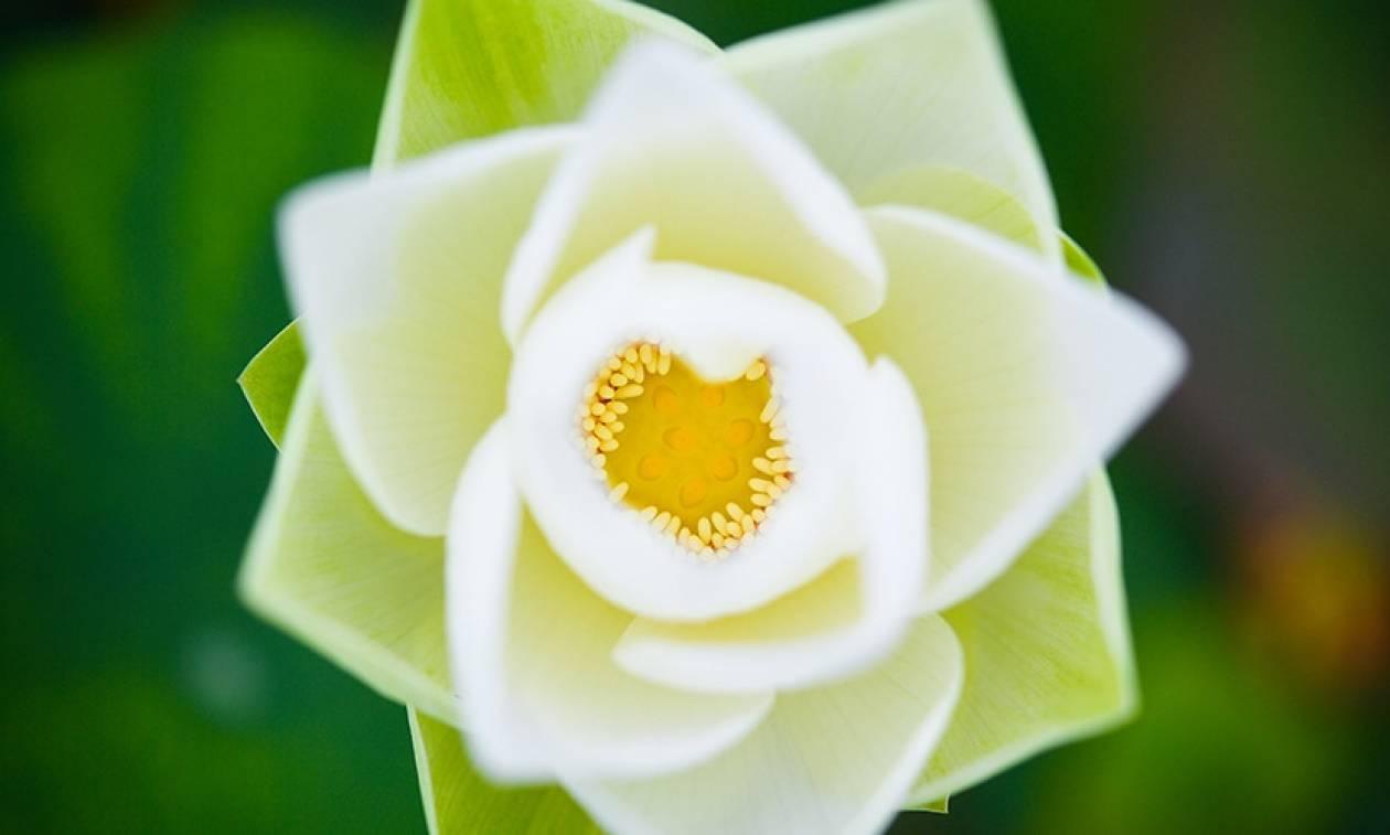Αποκάλυψη: Έτσι έμοιαζε το πρώτο λουλούδι που άνθισε στον πλανήτη Γη (Pics)