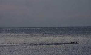 Χαλκιδική: Επιχείρηση διάσωσης κολυμβητή