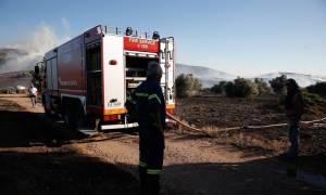 Θάσος: Υπό μερικό έλεγχο η φωτιά