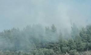 Πυρκαγιά σε δασική περιοχή στο Ποσείδι Χαλκιδικής (pics & vid)