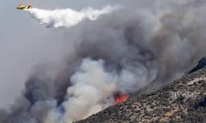Πυροσβεστική: Ποια η κατάσταση της φωτιάς στα Κύθηρα - 50 πύρινα μέτωπα το τελευταίο 24ωρο